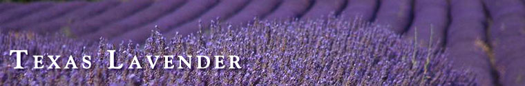 Shop Lavender Products made with fresh lavender from a farm near Austin Texas